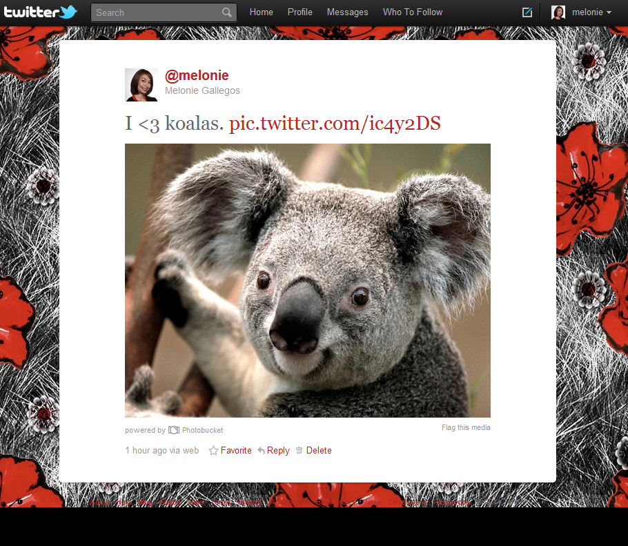 Twitter photo service display